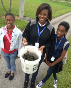 Students with MAST at FIU collect mangrove propagules for a restoration project.