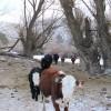 Isaak herd