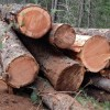 Demand from overseas helped sustain small and rural timber towns as new home construction foundered.