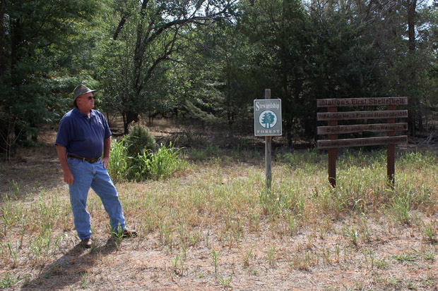 State forester Tom Murray stands near the nation's first shelterbelt near Willow, Okla., which has fared well after 80 years. Murray says trees in other sections of the windbreaks are dying from drought and lack of maintenance.