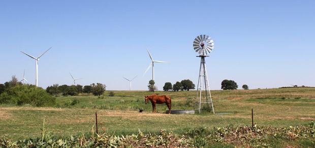 calumet-horse-wind