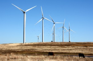 A wind farm near Weatherford, Okla.