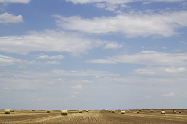 Many farmers in southwest Oklahoma have already abandoned their wheat crops and baled what they can for hay production.
