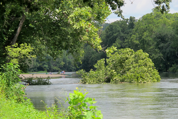 The Illinois River flows around a recently fallen tree near one of the waterway's public access points.