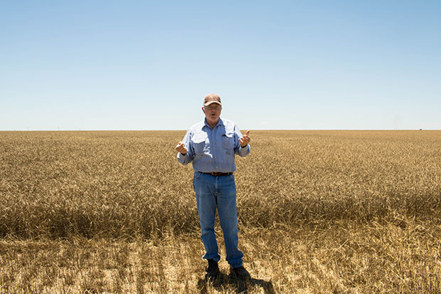 Wheat farmer Fred Schmedt stands in one of his family's fields south of Altus, Okla.