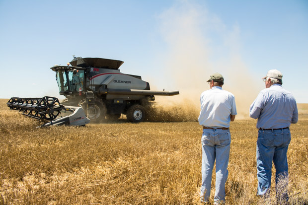 Farmers Wayne and Fred Schmedt watch a combine harvest wheat on their fields near Altus, Okla.