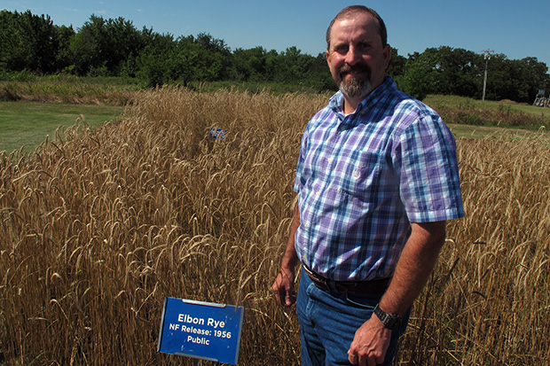 Mike Trammell, senior plant breeder at the Noble Research Institute, shows off the Elbon rye developed at the facility in Ardmore, Oklahoma.