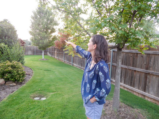 Stephanie Henson points out plants in her backyard garden in Edmond, Okla.