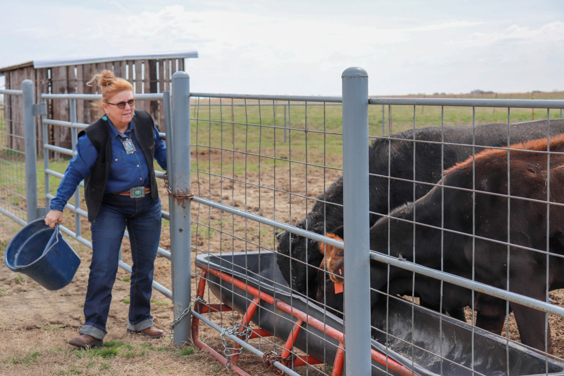 Terry Sue Barnett feeds her cows on her property in Nowata County.
