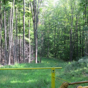 An underground pipeline snakes through the Susquehannock State Forest in Potter County.