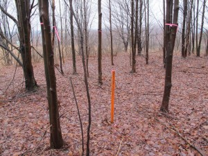 A stick marks the spot for a planned frack water disposal site in Brady Township, Clearfield County.