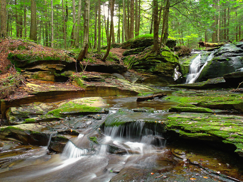 Loyalsock State Forest Stateimpact Pennsylvania