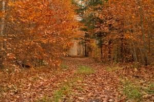 Hiking trail near Rock Run Bridge in the Loyalsock State Forest.