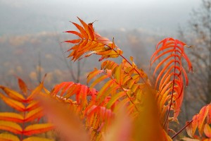 Fall foliage in the Loyalsock State Forest.