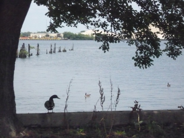 Wildlife along the Delaware River at Washington Avenue Green Park in Philadelphia.