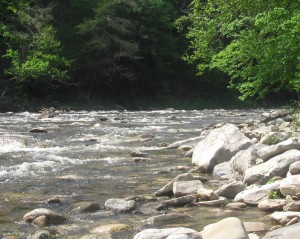 Loyalsock Creek in Sullivan County.