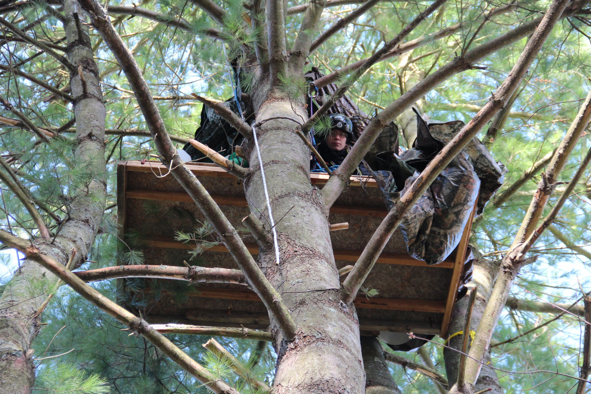 Pipeline protestor takes to the trees to stop construction