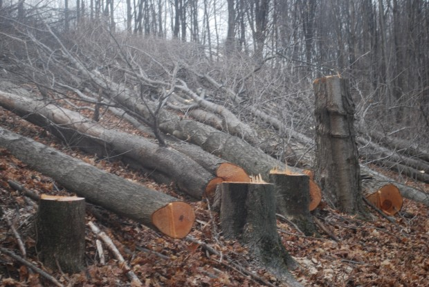 Trees cut on a Susquehanna County property in March 2016 to make way for the proposed Constitution Pipeline. The company says it will fight a FERC order upholding New York State's denial of a permit for the project.