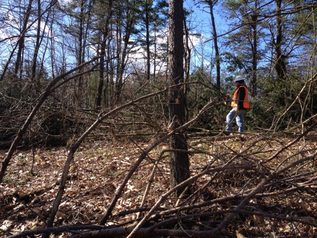 A tree clearing crew member from Sunoco on the Gerhart's property last week. Most of the trees were cleared last week but crews returned on Thursday to cut the remaining trees that were left untouched due to protesters occupying them.