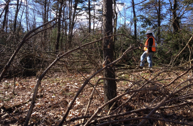 A tree clearing crew member on property in Huntingdon County where Sunoco was permitted to cut trees along the pipeline path before obtaining water crossing or earth moving permits from DEP.