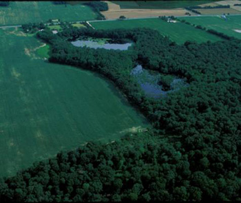 An aerial view of a coastal plain ponds in Delaware, also known as Delmarva bays. If the Trump administration scraps the Waters of the U.S. Rule, these waters would not be protected from pollution discharges.