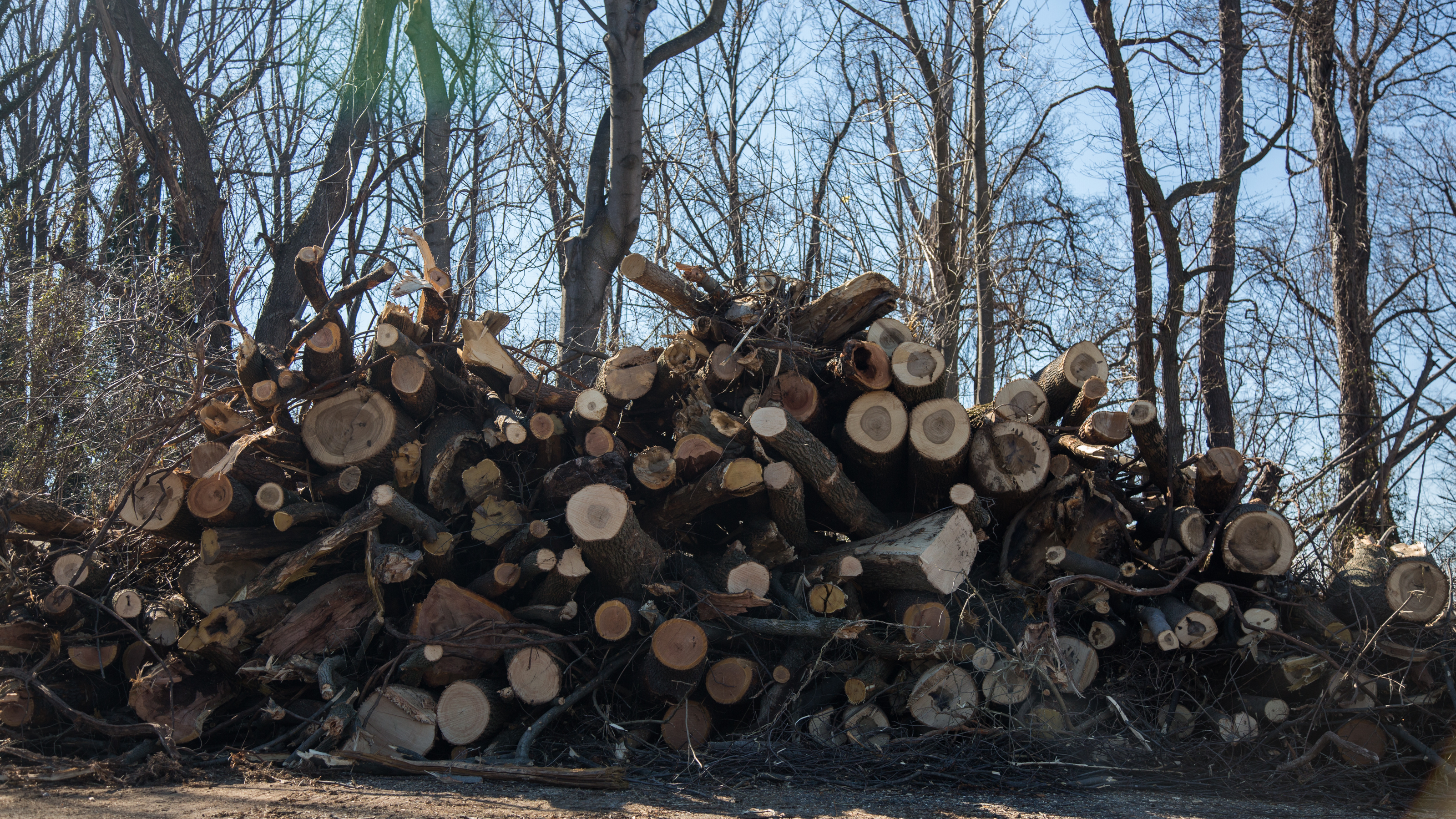 Judge denies latest call to halt mariner east 2 construction trees cleared in aston delaware county were among the first results of pre sciox Choice Image