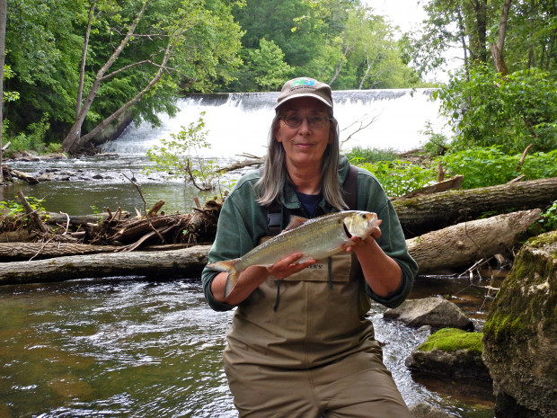 Biologist Pat Hamilton holds a shad caught near the Warren Glen Dam on the Musconetcong River in Holland Township.