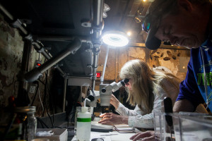 Biologist Lance Butler and Science Director Danielle Kreeger look at mussels and their larva to see if they are expelling viable larva known as Glochidia.