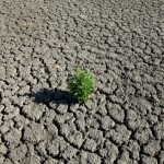 A weed grows out of the dry cracked bed of O.C. Fisher Lake in July. The drought has taken a severe toll on Texas' lakes and rivers.