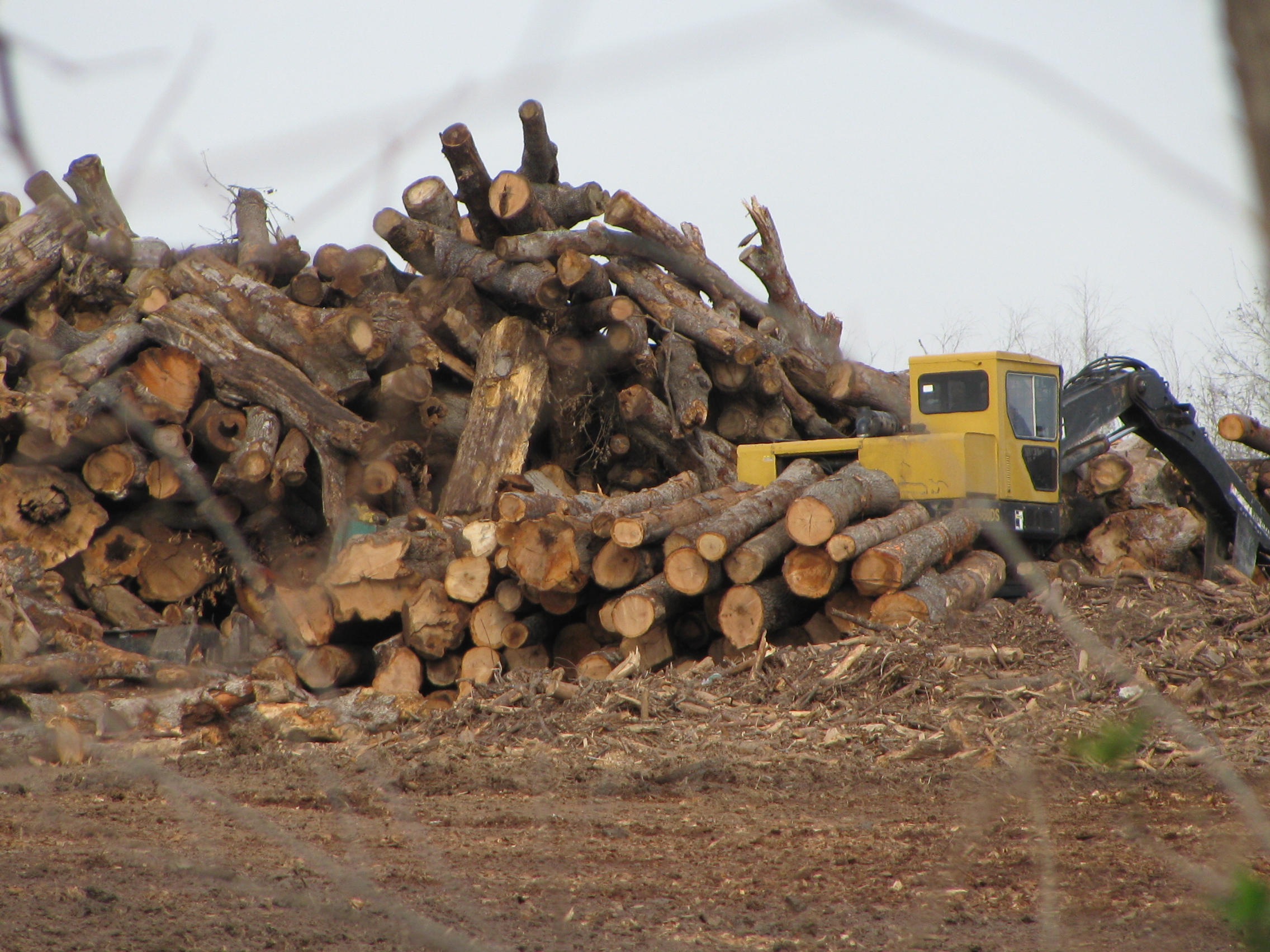 The Race to Salvage Millions of Dead Trees in Texas
