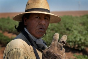 Juan Rico works in an cotton field that is watered by an underground irrigation system July 27, 2011 near Hermleigh, Texas.