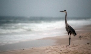 A crane stands on the beach at dawn on the one-year anniversary of the BP oil spill on April 20, 2011 in Orange Beach, Alabama.