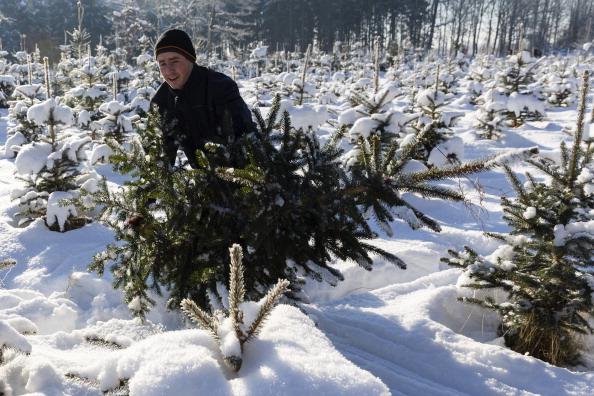 Forestries Open Christmas Tree Season | StateImpact Texas