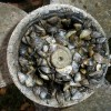 Zebra mussels clustered in a boat propeller.