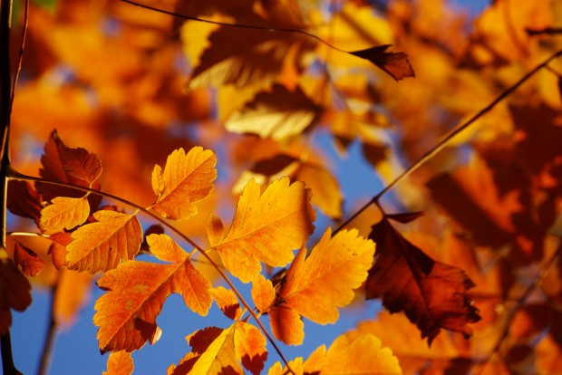 Austin's seeing brighter leaves this fall, thanks to recent rainfall.
