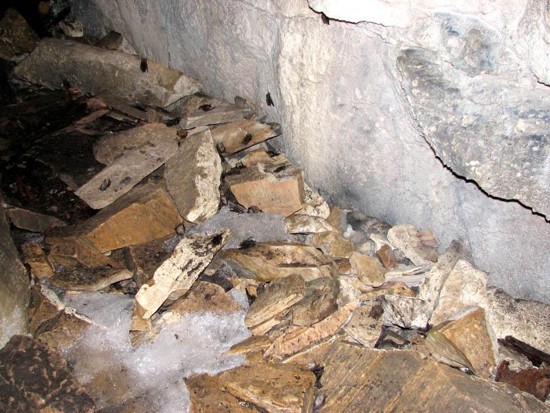 Killer of Bats Inches Towards Texas | StateImpact Texas