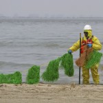 A worker places oil absorbent snares on the beach on the east end of Galveston Island