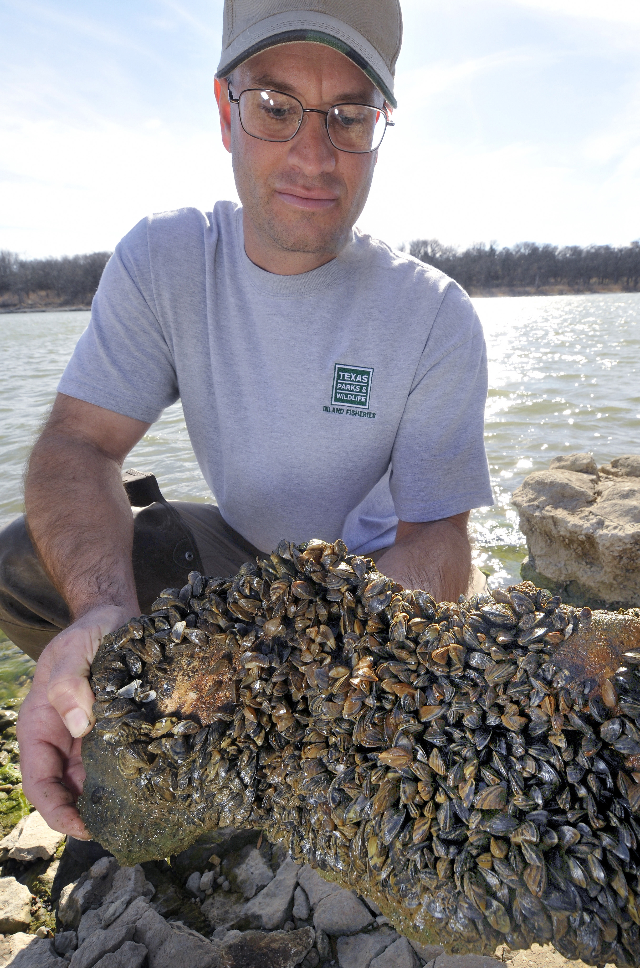 Texas Parks and Wildlife's Todd Robinson holds a rock covered with ...