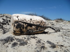 After the oil was pushed ashore, it was covered by a layer of sand, making it more difficult to detect.