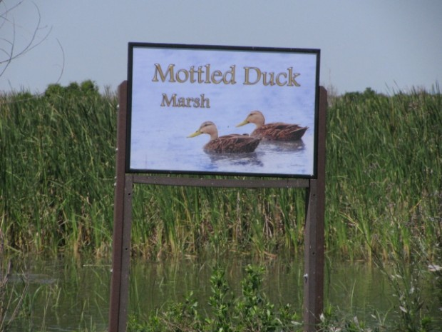 Duck habitat developed using federal funds by Texas Public Lands Wetlands Initiative