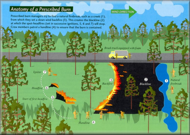 In a prescribed burn, firefighters set a line of fire to burn against the wind then start flames upwind at the place they would like the blaze to stop.